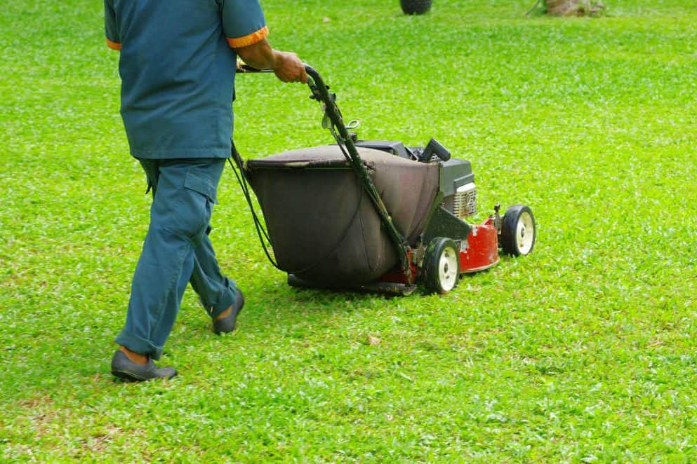 What are the benefits of hiring the professional services for lawn mowing?